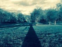 Langer Schatten des hohen Baums stockbild