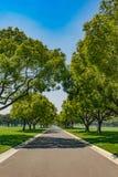 Langer Schattenbaum-Weg Stockbilder
