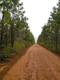Langer und endloser Schotterweg von Bäumen gesäumt Lizenzfreie Stockfotos