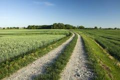 Langer Weg durch die Felder zum Wald stockfotos
