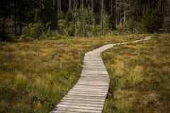 Langer Weg im Wald von Deutschland Stockfotografie