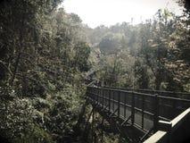 Langer Weg zur tiefen Natur Stockbilder