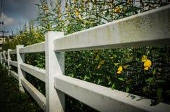 Langer Zaun Stockbild