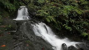 Langes Belichtungswasserfließen von Shepperds Dell Falls in Oregon entlang Columbia River Schlucht mit Audio 1080 stock footage