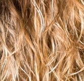 Langes blondes Haar als Hintergrund Stockbild