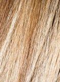 Langes blondes Haar als Hintergrund Stockfotografie