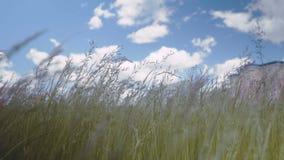 Langes grünes Gras, das in den Wind auf der Insel von Mindoro in den Philippinen sich bewegt stock footage
