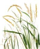 Langes Gras stockfoto