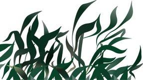 Langes Gras Stockbilder
