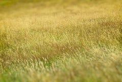 Langes Gras lizenzfreie stockfotografie