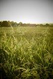 Langes Gras auf dem Gebiet Lizenzfreie Stockfotos