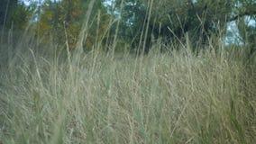 Langes Gras in einem Wald trocken stock video