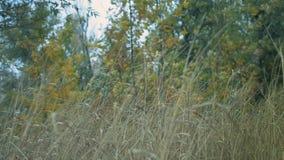 Langes Gras in einem Wald trocken stock video footage