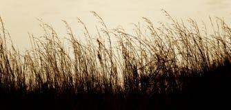 Langes Gras gegen Wasser lizenzfreie stockfotos