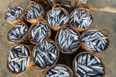 LANGES HAI, VIETNAM - 3. JULI 2016: Frische Fische auf plasitc Korb für Verkauf im langen Hai-Fischmarkt auf dem Strand stockbilder