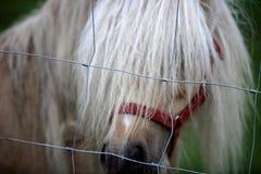 Langes Mähnenpony mit dem Haar in seinem Gesicht, das seine Augen bedeckt Stockfoto