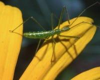 Langes mit Beinen versehenes Insekt lizenzfreie stockbilder