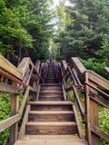 Langes Treppenhaus, das oben in die Bäume im Wald steigt Stockbild