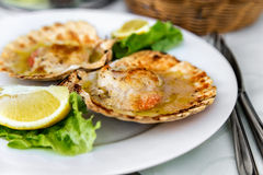 Langetterar den smakliga maträtten för den havs- maträtten av kammusslor med sås, grönsallat och citronen med en härlig portionska Royaltyfria Foton
