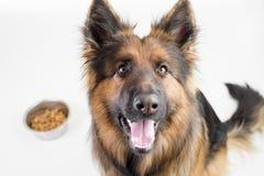 Langhaariger Hund des Schäferhunds, der nahe Schale mit Zufuhr sitzt Stockfoto