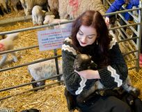 Langharig meisje op een landbouwbedrijf die een pasgeboren lam koesteren royalty-vrije stock foto
