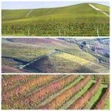 Langhe小山的葡萄园风景 图库摄影