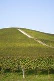 Langhe小山的葡萄园  图库摄影