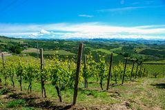 Langhe葡萄园,山麓-意大利 库存图片