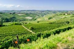 Langhe, λοφώδης περιοχή κρασιού Piedmont, Ιταλία Στοκ Εικόνα