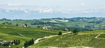 Langhe, виноградники Стоковое Изображение RF