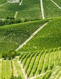 Langhe, виноградники Стоковые Фотографии RF