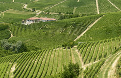 Langhe, виноградники Стоковое фото RF