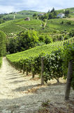 Langhe, Barolo vineyards summer panorama. Color image Stock Images