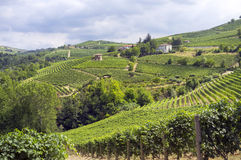 Langhe, Barolo vineyards summer panorama. Color image Stock Photography