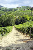 Langhe, Barolo vineyards summer panorama. Color image Royalty Free Stock Photography