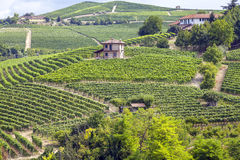 Langhe, Barolo vineyards summer panorama. Color image Stock Photos