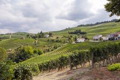 Langhe, Barolo vineyards summer panorama. Color image Royalty Free Stock Photos