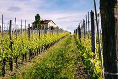 Langhe en Roero-wijngaarden de lente Wijnbouw dichtbij Barolo, Piemonte, Itali?, Unesco-erfenis Dolcetto, Barbaresco stock afbeeldingen
