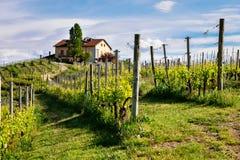 Langhe en Roero-wijngaarden Landbouwbedrijf op de heuvel dichtbij Barolo Nebbiolo, Dolcetto, de rode wijn van Barbaresco Wijnbouw stock foto