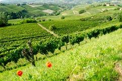 Langhe, heuvelig wijngebied in Piemonte, Italië stock foto