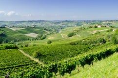 Langhe, heuvelig wijngebied in Piemonte, Italië royalty-vrije stock foto