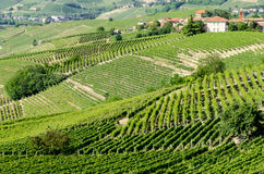 Langhe, hilly wine region in Piedmont, Italy Royalty Free Stock Photo