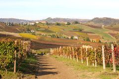 Langhe landscape, Italy Royalty Free Stock Images