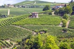 Langhe, panorama d'été de vignobles de Barolo Image de couleur Photos stock