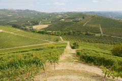 The Langhe Stock Photo
