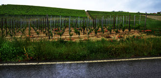 Langhe in the rain Royalty Free Stock Photo