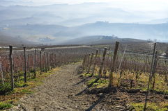 Langhe and Roero hills, Piemonte, Italy Royalty Free Stock Image