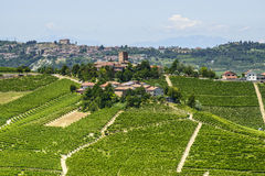 Langhe, vignobles Photos stock