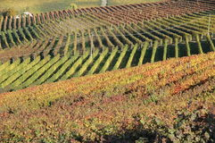 Langhe vineyard Royalty Free Stock Photography