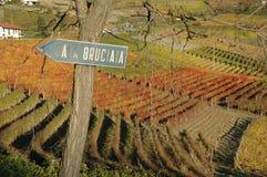 Langhe vineyards Royalty Free Stock Photo
